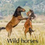Τα άγρια άλογα στο Λούρο!
