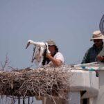 Ο Φορέας Διαχείρισης καλεί τους πολίτες για εθελοντισμό στην προστασία της φύσης