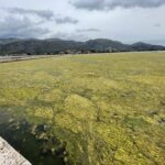 To απέραντο… πράσινο στη λιμνοθάλασσα Αιτωλικού!
