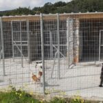 «Πράσινο» φως από το Υπουργείο Εσωτερικών για την κατασκευή καταφυγίου αδέσποτων ζώων στο Δήμο Ι.Π. Μεσολογγίου