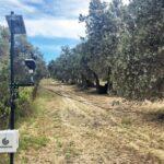 Πρόσκληση σε διαδικτυακή ημερίδα για την ευφυή γεωργία στην καλλιέργεια της ελιάς