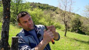 Μπόλιασμα, κέντρωμα και εμβολιασμός καρποφόρων δέντρων με διαφορετικές τεχνικές