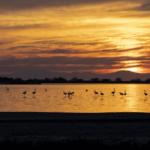 Διάκριση Αιτωλοακαρνάνων φωτογράφων σε πανελλήνιο φωτογραφικό διαγωνισμό για τις περιοχές Natura