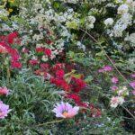 Ανοίγει και πάλι για το κοινό ο Βοτανικός Κήπος «Ζέλιος Γη»