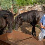 Ο μπάρμπα-Γιάννης Κάτσιος από τη Λεπενού και τα άλογά του
