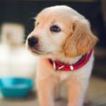 5 αντικείμενα που θα χρειαστείτε για τον σκύλο σας