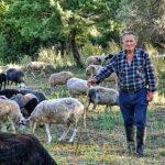 Η ιστορία του μετακινούμενου κτηνοτρόφου Μπαρμπα Βασίλη από τη Στάνο Αμφιλοχίας