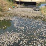 Έγκλημα: Τόνοι από νεκρά ψάρια στη Βόνιτσα!