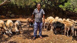 Ο Τσέλιγκας Παντελής, ο μοναδικός κτηνοτρόφος στο νησί Κάλαμος (vid)