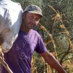 Αναβίωση ξεφλουδίσματος κοντόροκας με την πατόζα του Κοσμά Μακρή στον ορεινό Βάλτο