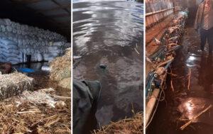 Η απόλυτη καταστροφή σε καλλιέργειες και κτηνοτροφικές μονάδες στον κάμπο του Λεσινίου